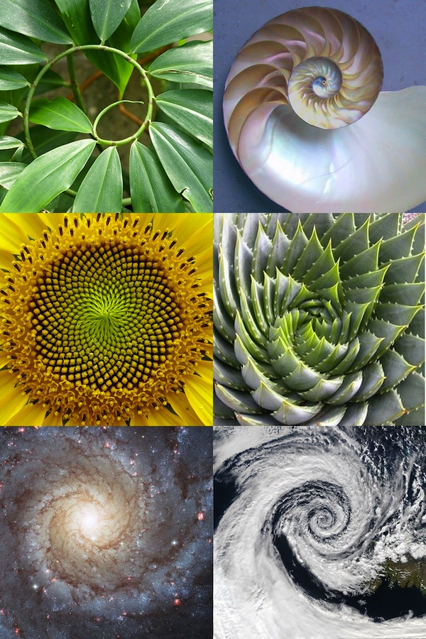 Patterns Found in Nature and Music